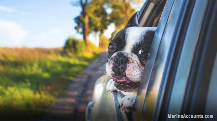 Dog Enjoying Breeze
